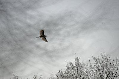 Heron in the sky - p1041m2073319 by Franckaparis