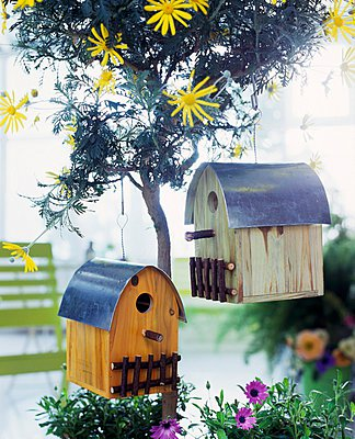 Bird house hanging on a small tree with yellow flowers - p1183m996945 by Manduzio, Matteo
