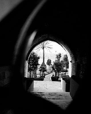 Palmen im Garten des Sepetçiler Pavillon am Ufer des Bosporus, Kennedy Ave, Istanbul - p1493m1585660 von Alexander Mertsch