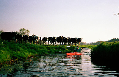 Kühe als Zuschauer - p2190102 von Carsten Büll