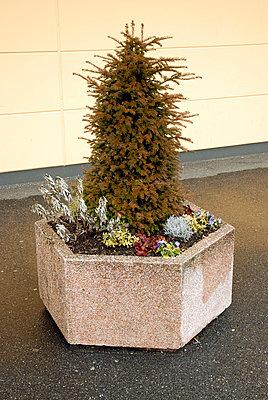 Blumenpoller - p2600169 von Frank Dan Hofacker