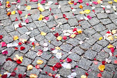 Rosenblätter auf den Boden - p680m1119850 von Stella Mai