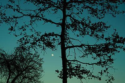Der grüne Himmel - p1578m2157524 von Marcus Hammerschmitt