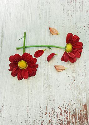 Two flowers - p971m911960 by Reilika Landen