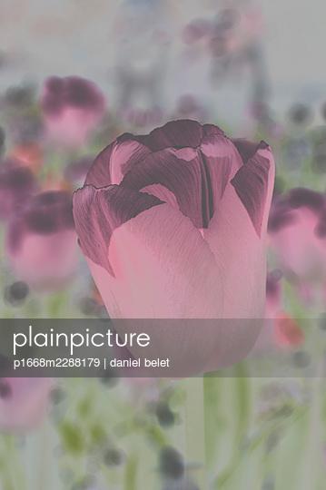 Rote Blume - p1668m2288179 von daniel belet