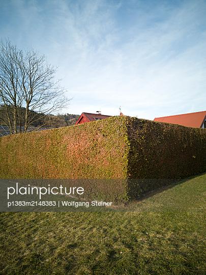 Sauber geschnittene Hecke umrahmt ein privates Grundstück - p1383m2148383 von Wolfgang Steiner