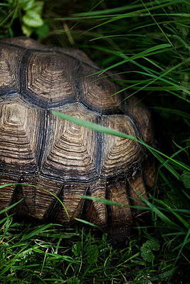 Schildkrötenpanzer - p1195m1071076 von Kathrin Brunnhofer
