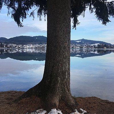 Pörtschach, Wörthersee, einzelner Baum am See - p1401m2231742 von Jens Goldbeck