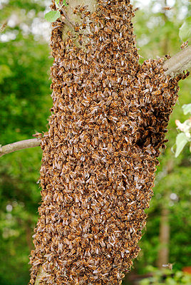 Beehive - p2350548d by KuS