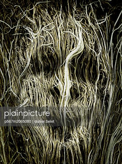 Gruselgesicht - p567m2065080 von Daniel Belet