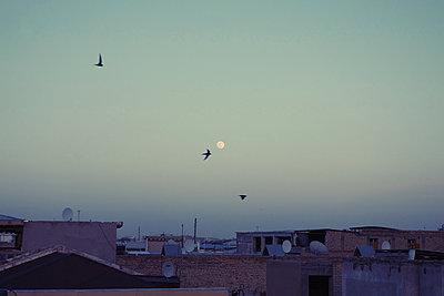 Vögel fliegen über die Dächer einer Stadt bei Vollmond - p1189m2176144 von Adnan Arnaout