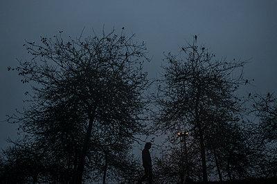 Night walk - p1601m2173216 by Isabelle Scotta