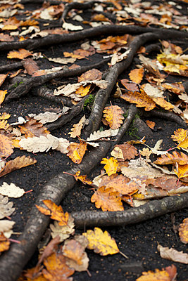 Roots and leaves in autumn - p1980305 by David Breun
