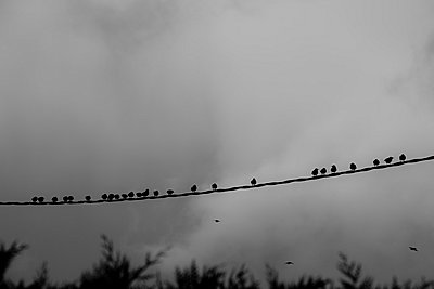 Birds on a wire - p248m787998 by BY