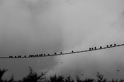 Vögel auf der Leitung - p248m787998 von BY