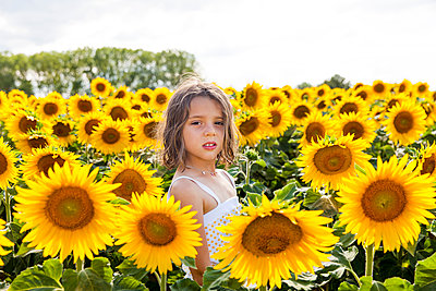 Sunflower field - p756m1057160 by Bénédicte Lassalle