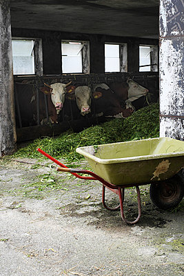 Cowshed - p989m932556 by Gine Seitz