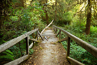 Old broken footbridge in forest - p1166m1174103 by Cavan Images