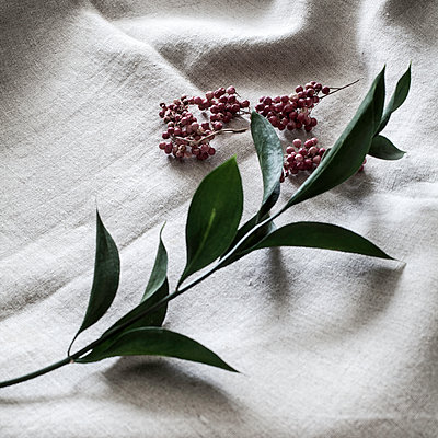 Pink pepper berries on linen cloth - p1470m1539171 by julie davenport