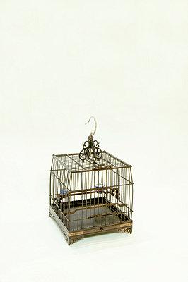 Chinese bird cage - p4850064 by Kiriko