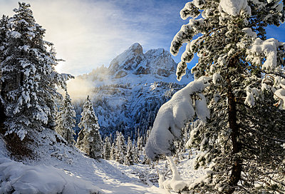 The sun illuminates the snowy trees and Sass De Putia in the background, Passo Delle Erbe, Funes Valley, South Tyrol, Italy, Europe - p871m1221567 by Roberto Moiola