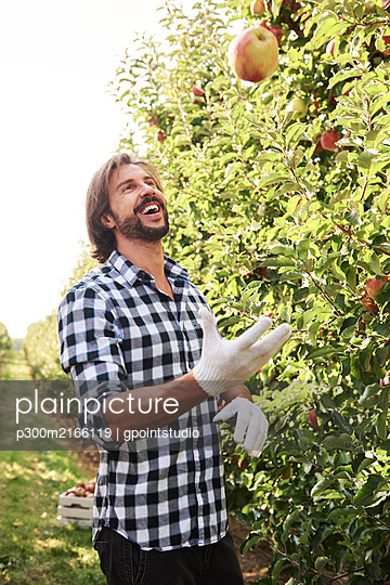 Happy fruit grower juggling with apples in orchard - p300m2166119 von gpointstudio