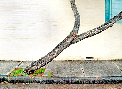 Tree on sidewalk - p1125m917351 by jonlove