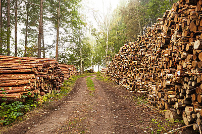 Logs along dirt track - p312m1147628 by Johan Alp