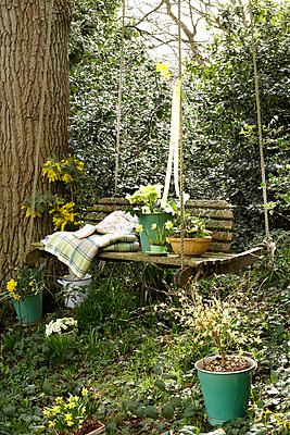 Daffodils on swing seat in Isle of Wight;  UK - p349m920091 by Rachel Whiting