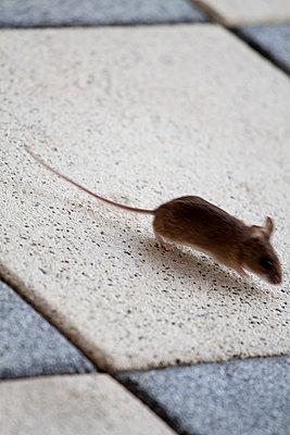 Little mouse - p7390363 by Baertels