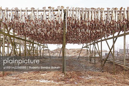 cod drying - p1691m2288585 by Roberto Berdini Bokeh