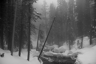 River in snow-covered forest - p1134m1440789 by Pia Grimbühler