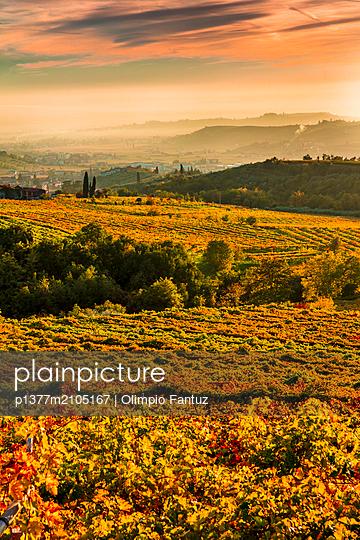 Italy, Veneto, Verona district, Valpolicella, Negrar, Typical landscape, vineyards - p1377m2105167 by Olimpio Fantuz