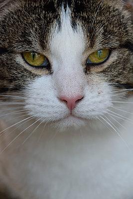 Katze - p1235m1539620 von Karoliina Norontaus