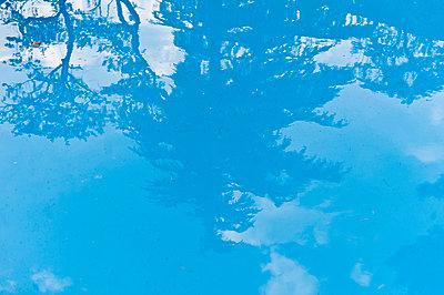 Spiegelung von Laubbäumen in einem Pool, Bayern, Deutschland, Europa - p1316m1160508 von Peter von Felbert