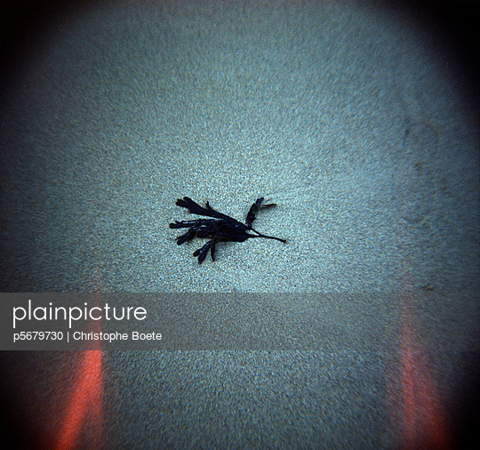 Alga - p5679730 by Christophe Boete