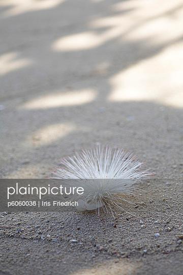 Thailändische Pflanze im Sand - p6060038 von Iris Friedrich