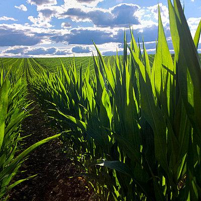 Farmland - p813m701032 by B.Jaubert
