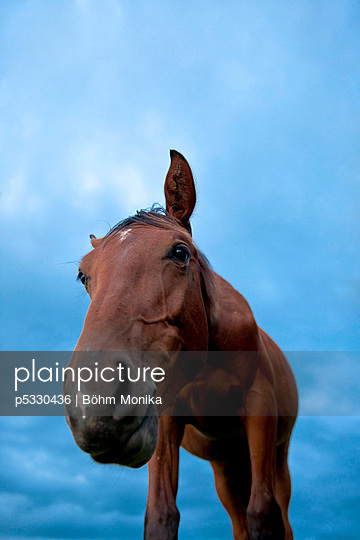Pferd - p5330436 von Böhm Monika