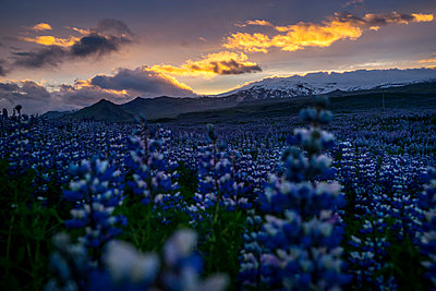 Iceland - p1467m2013939 by Lowy + Lacar