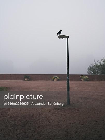 Raven perched on lantern against screen of fog - p1696m2296635 by Alexander Schönberg
