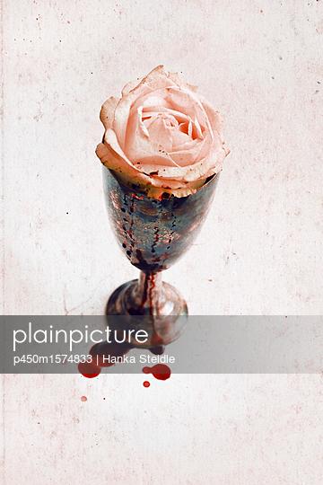Blutende Rose     - p450m1574833 von Hanka Steidle