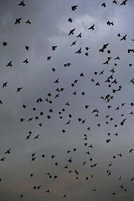 Birds in the sky - p1021m856330 by MORA