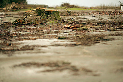 Felled trees and puddles - p300m878818 by Mareen Fischinger