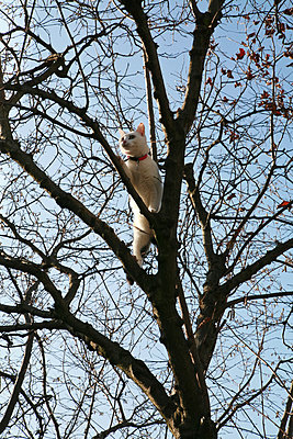 Cat in a tree - p927m916080 by Florence Delahaye