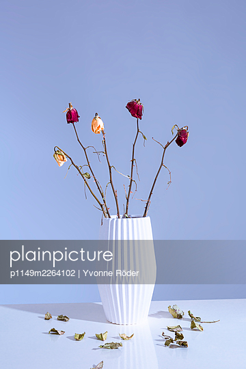 Withered flowers - p1149m2264102 by Yvonne Röder