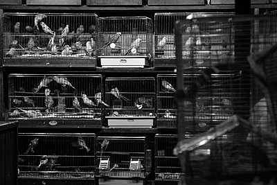 Birds at a market - p1065m885856 by KNSY Bande