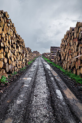 Timber industry - p1149m1492416 by Yvonne Röder