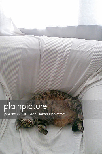 Cat Sleeping Peacefully In White Armchair