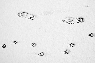 Dog and human footprints on a road in the snow - p3437626f by Jonathan Kingston